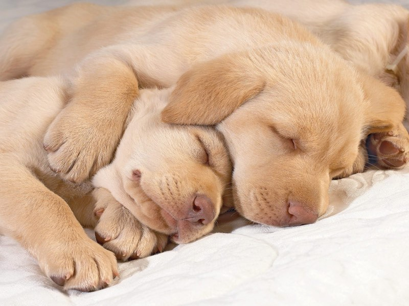 puppies sleeping